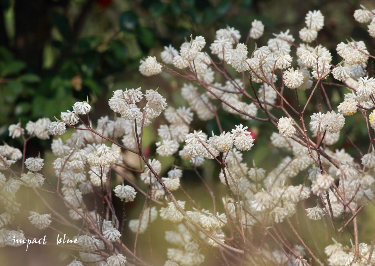 ぶらり、野草園散歩(*^^*)_a0355908_19475191.jpg