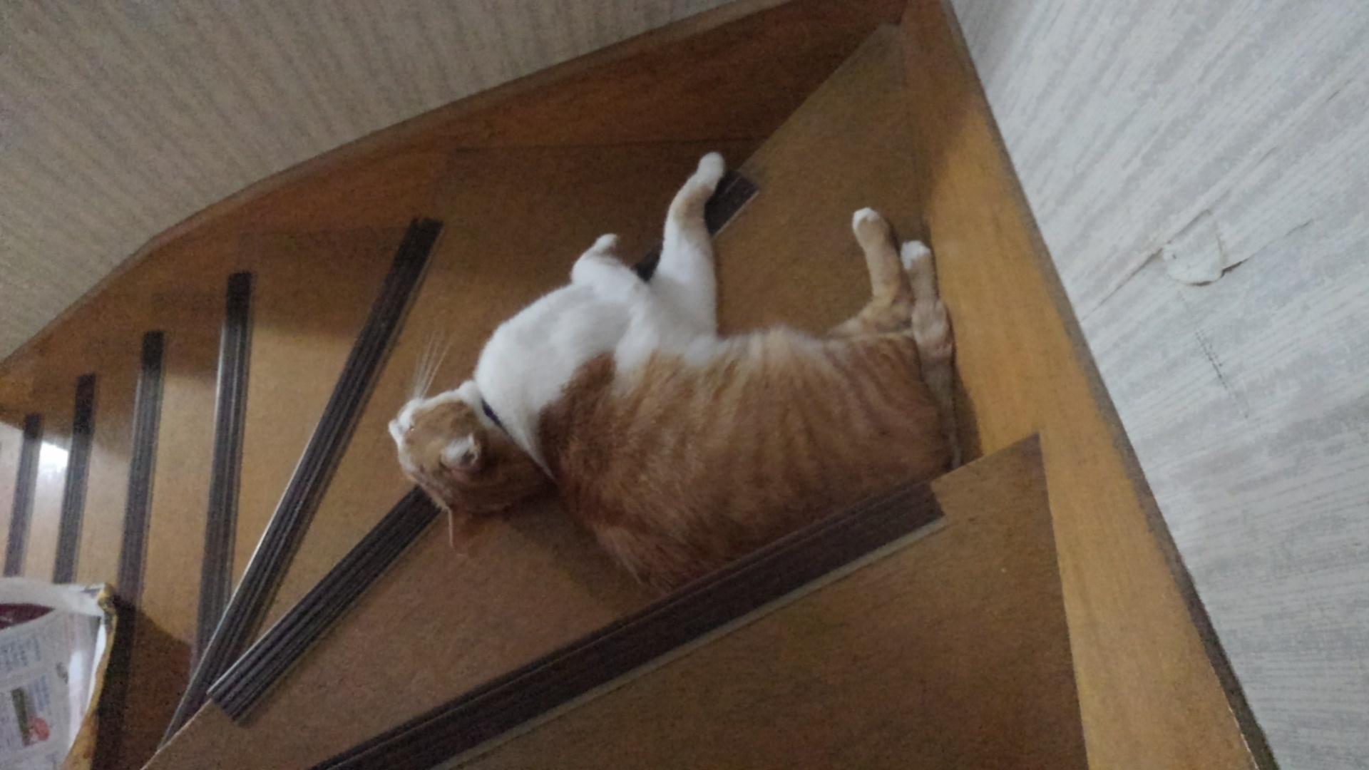 【猫】同化?_f0141609_11445523.jpg