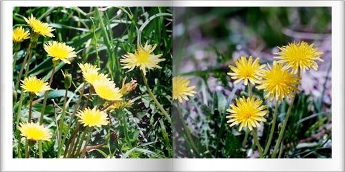 吉備路の野の花たち_c0026824_16345296.jpg