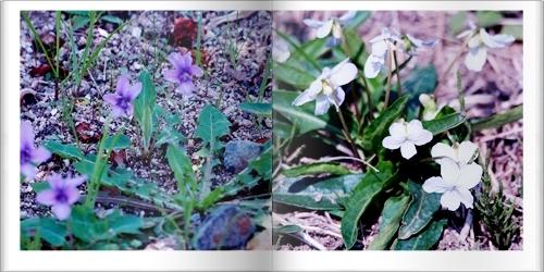 吉備路の野の花たち_c0026824_16350400.jpg