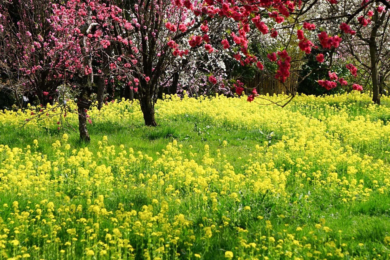 どこも春爛漫_c0220824_12042045.jpg