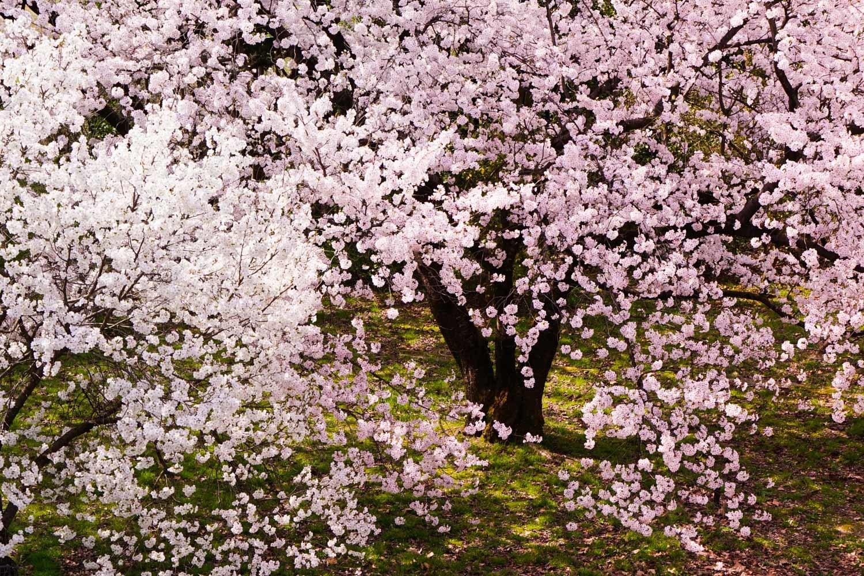 どこも春爛漫_c0220824_12043258.jpg