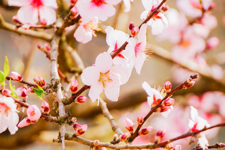 どこも春爛漫_c0220824_12043631.jpg