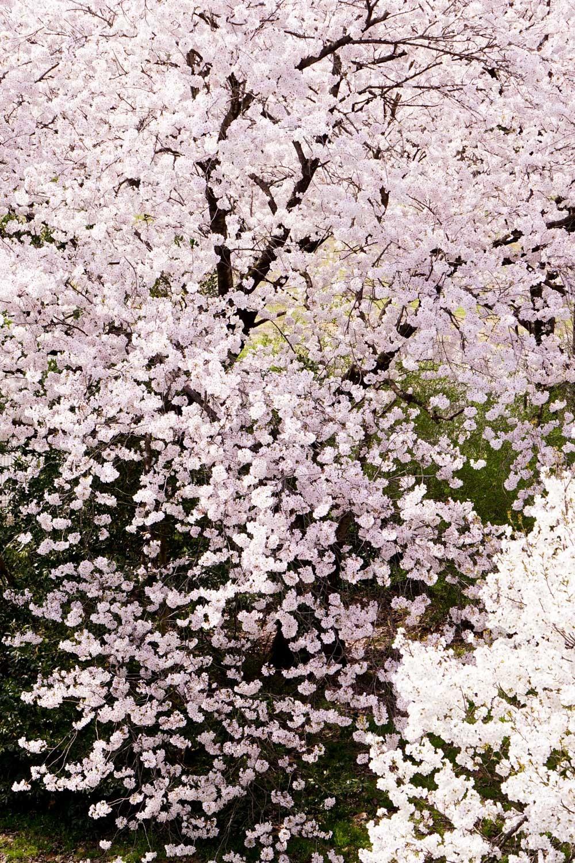どこも春爛漫_c0220824_12044083.jpg