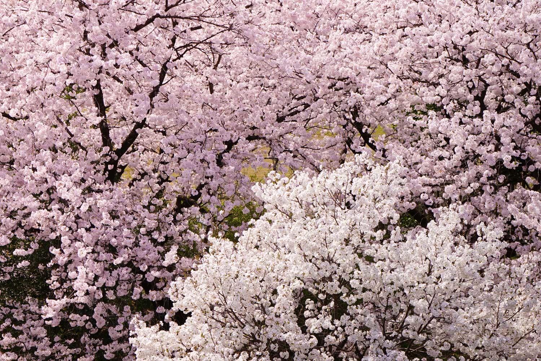どこも春爛漫_c0220824_12063461.jpg