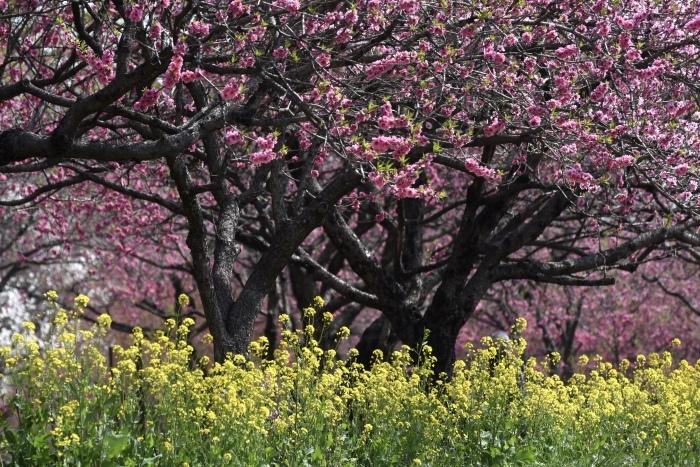 【古河総合公園】_f0348831_22423351.jpg