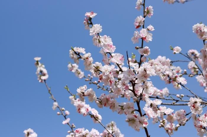 【古河総合公園】_f0348831_22480866.jpg