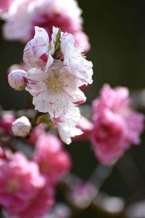 【古河総合公園】_f0348831_22481170.jpg