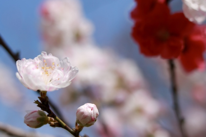 【古河総合公園】_f0348831_22481700.jpg