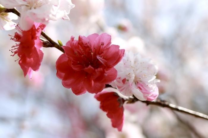 【古河総合公園】_f0348831_22481705.jpg