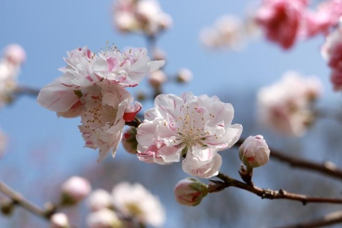 【古河総合公園】_f0348831_22481848.jpg