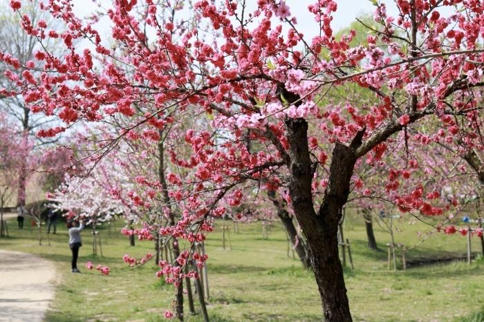 【古河総合公園】_f0348831_22482198.jpg
