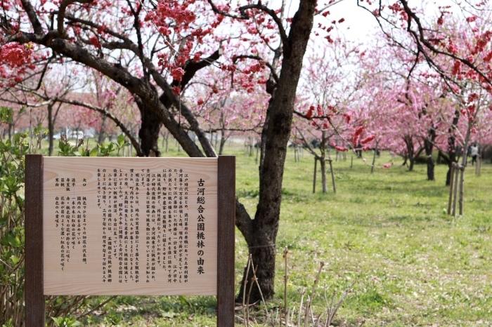 【古河総合公園】_f0348831_22485485.jpg