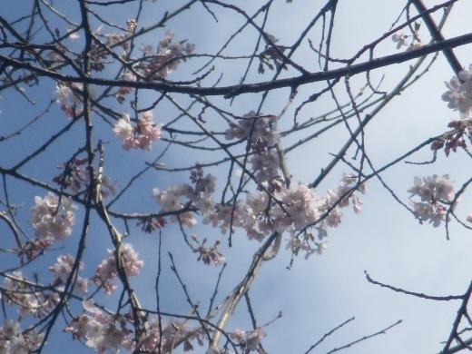春の息吹       4月4日       _d0127634_15292818.jpg