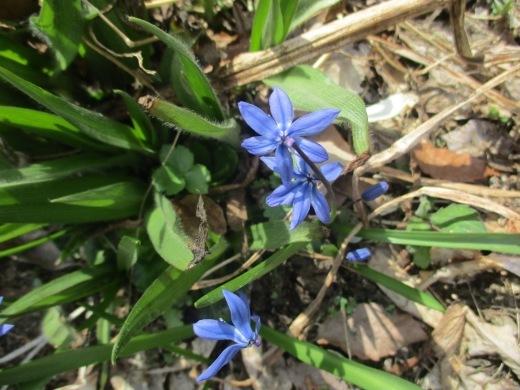 春の息吹       4月4日       _d0127634_15423865.jpg
