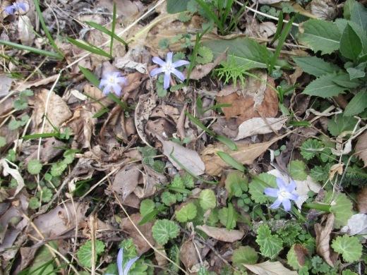 春の息吹       4月4日       _d0127634_15460925.jpg