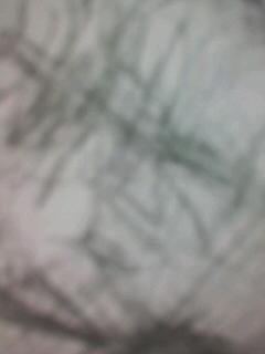 b0136144_11535619.jpg