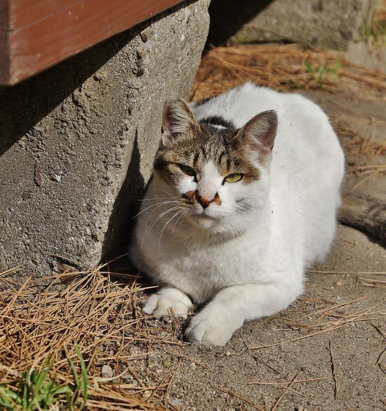 夙川公園の桜(1)猫の花見_b0063958_11070948.jpg