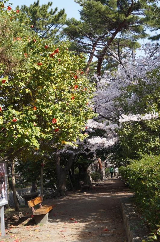 夙川公園の桜(2)椿と桜_b0063958_12094495.jpg