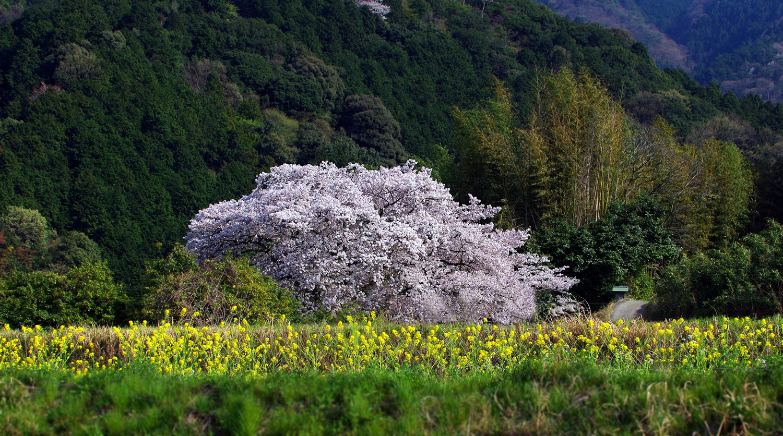 塔原の一本桜_f0215767_13543285.jpg
