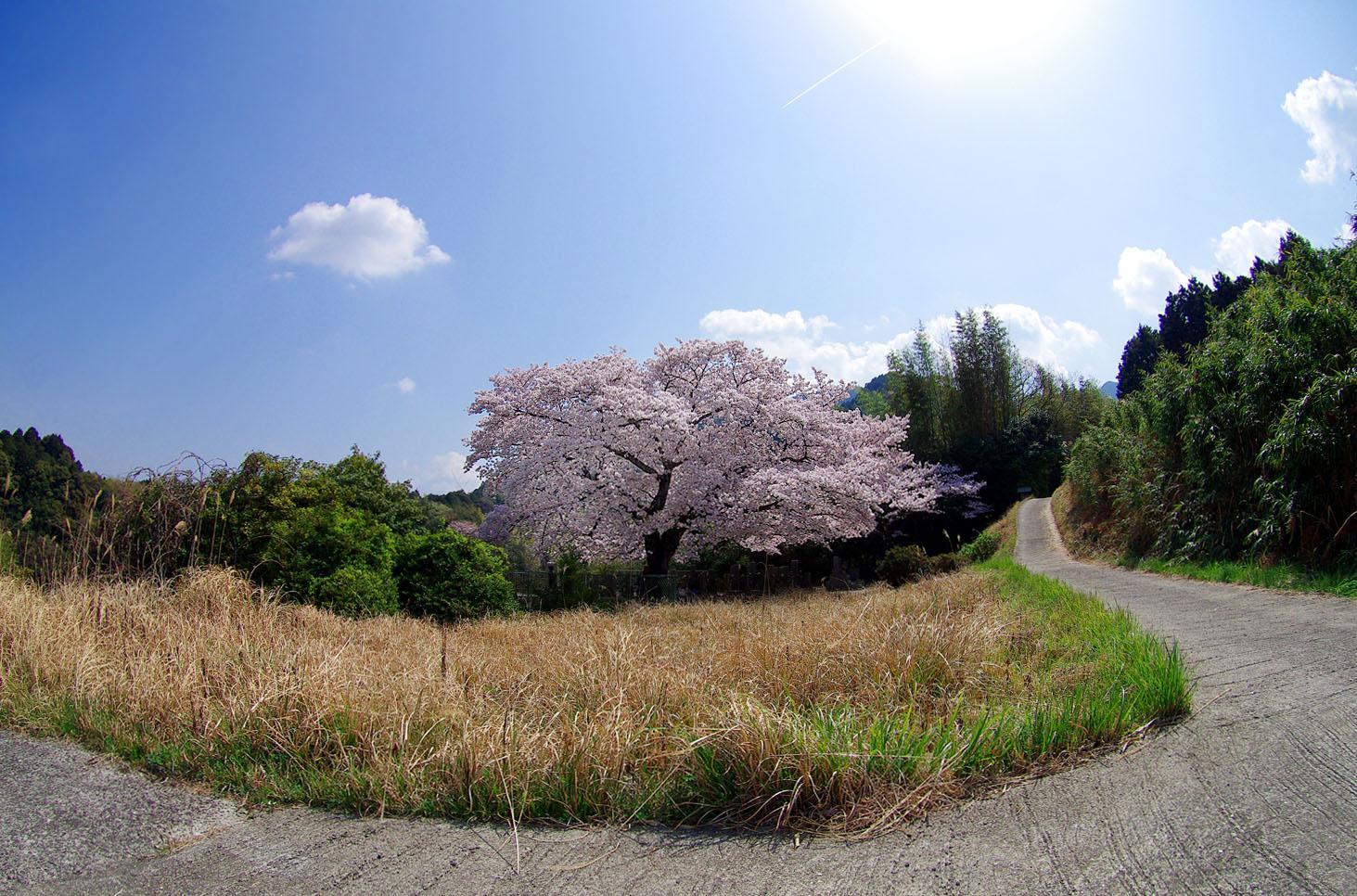 塔原の一本桜_f0215767_13544348.jpg