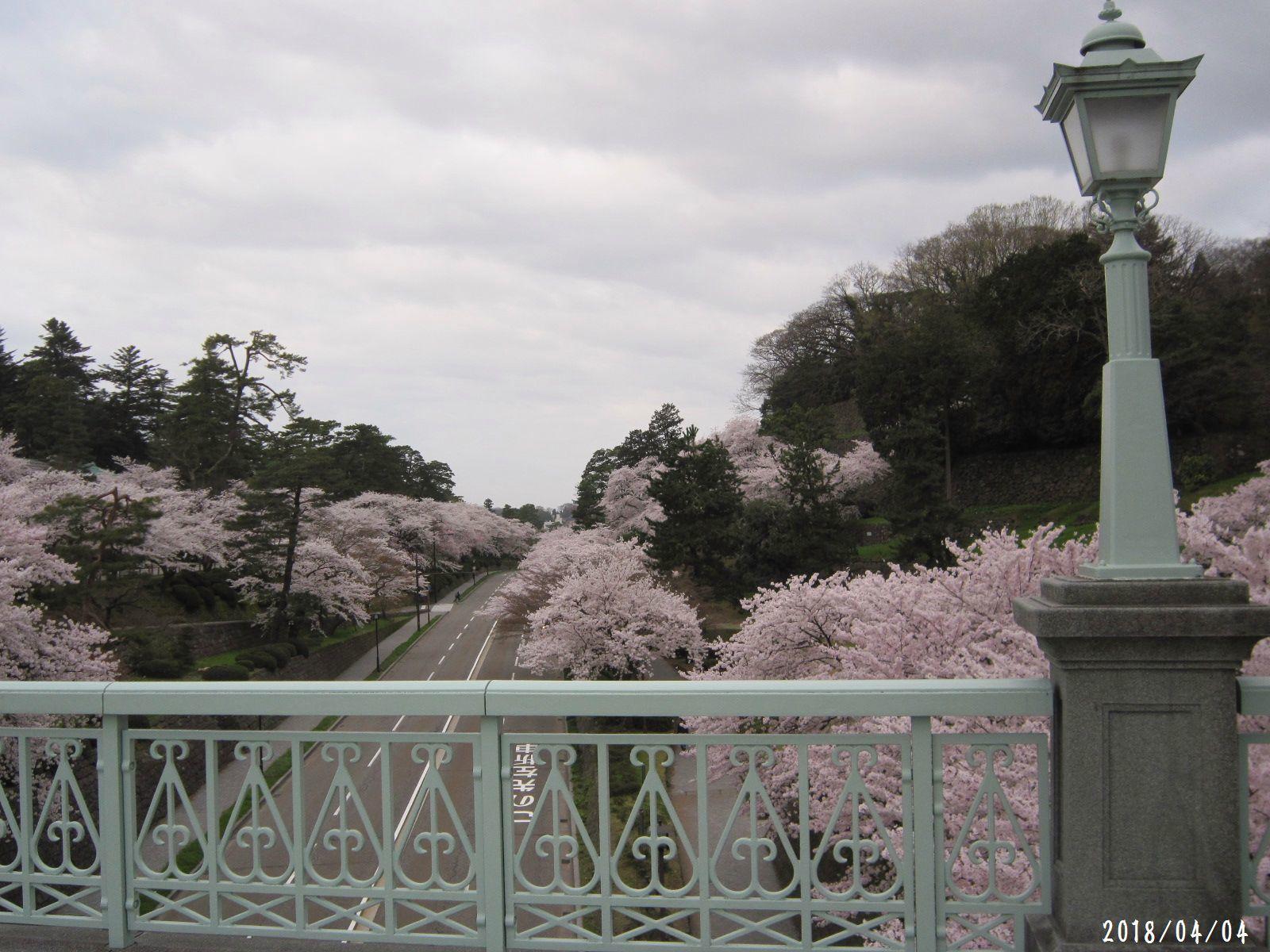 桜だより❀ 満開です❀ (4月7日 追記あり)  _a0207574_16440949.jpg