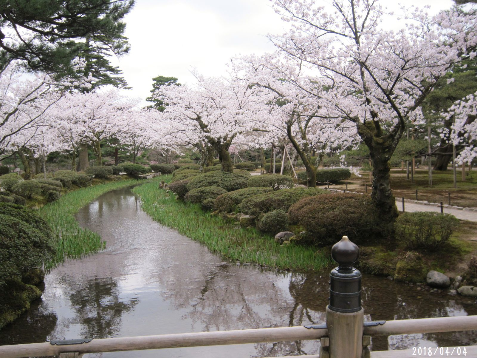 桜だより❀ 満開です❀ (4月7日 追記あり)  _a0207574_16450468.jpg