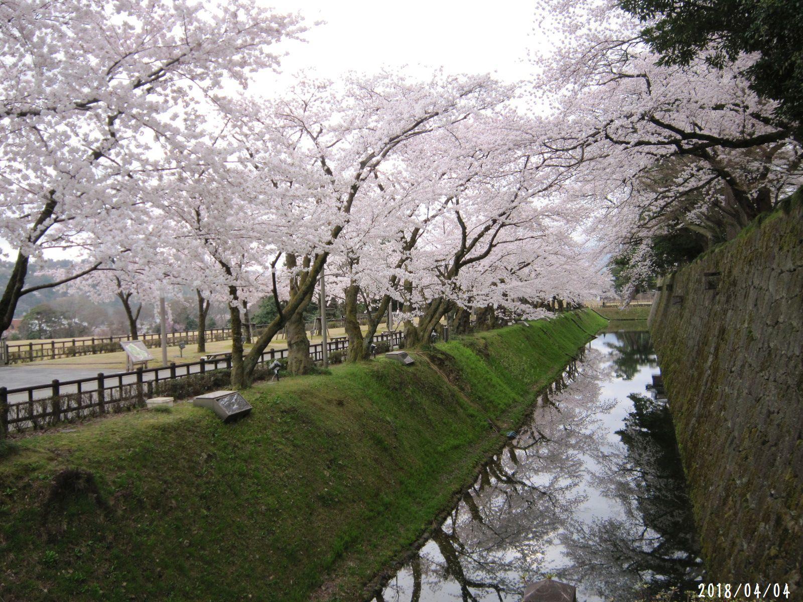 桜だより❀ 満開です❀ (4月7日 追記あり)  _a0207574_16462611.jpg
