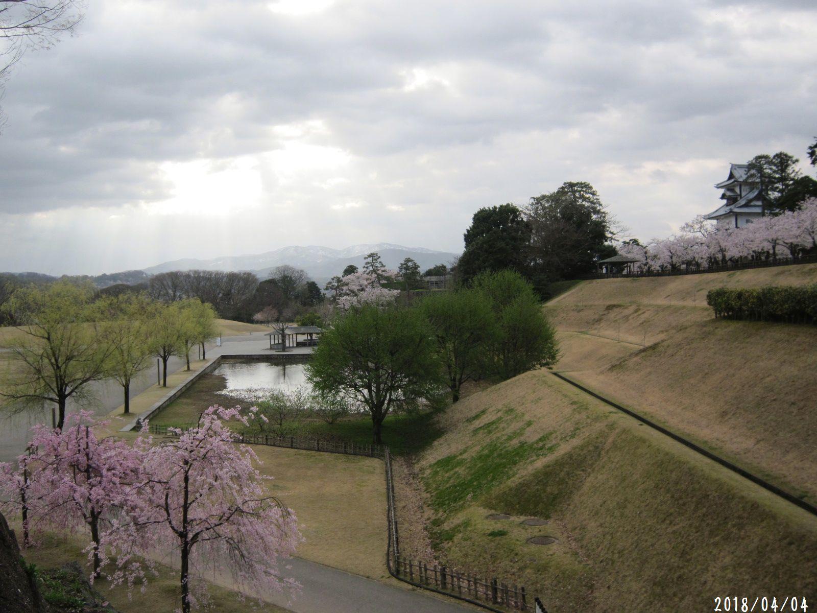 桜だより❀ 満開です❀ (4月7日 追記あり)  _a0207574_16564767.jpg