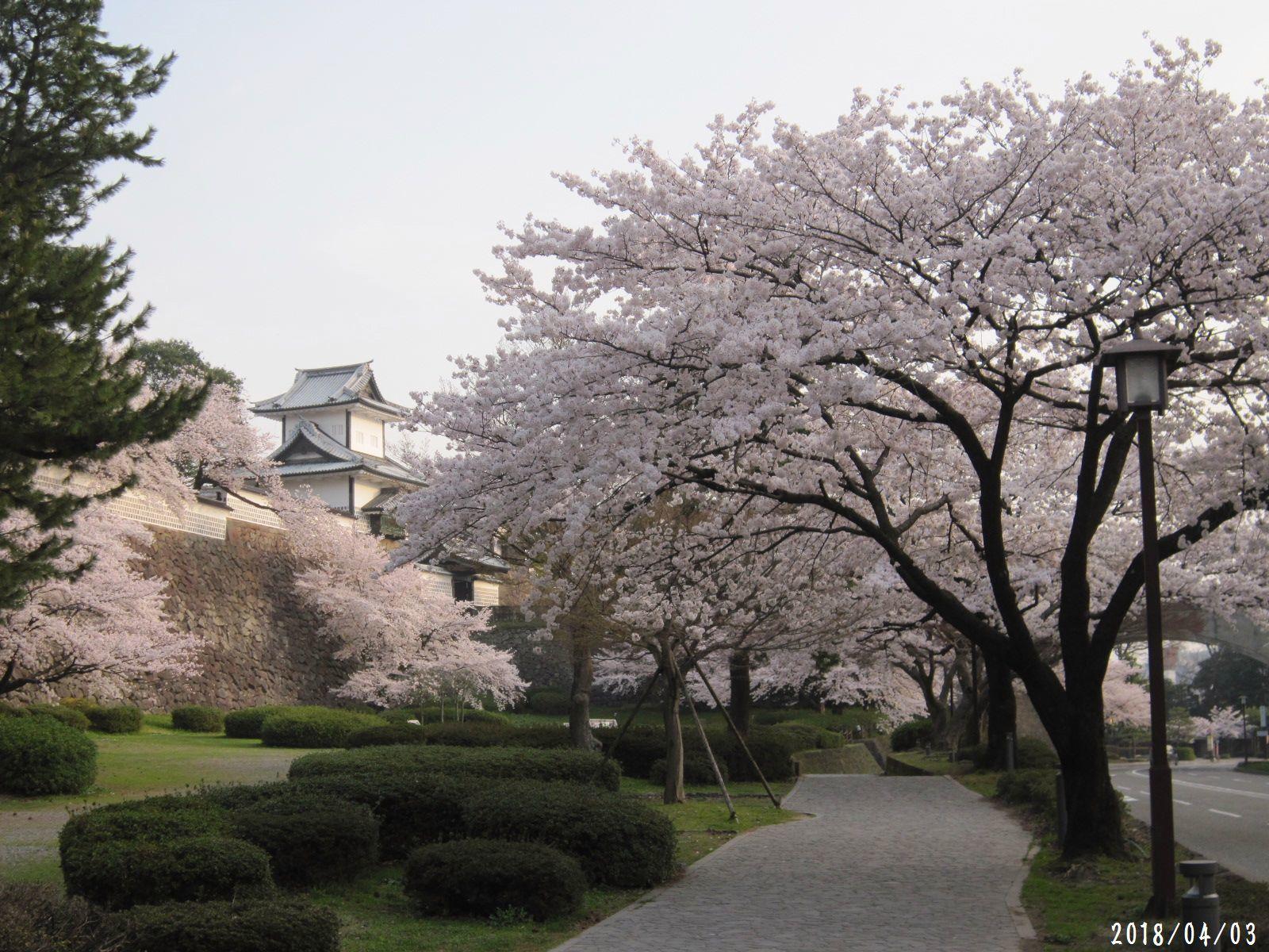 桜だより❀ 満開です❀ (4月7日 追記あり)  _a0207574_17103974.jpg