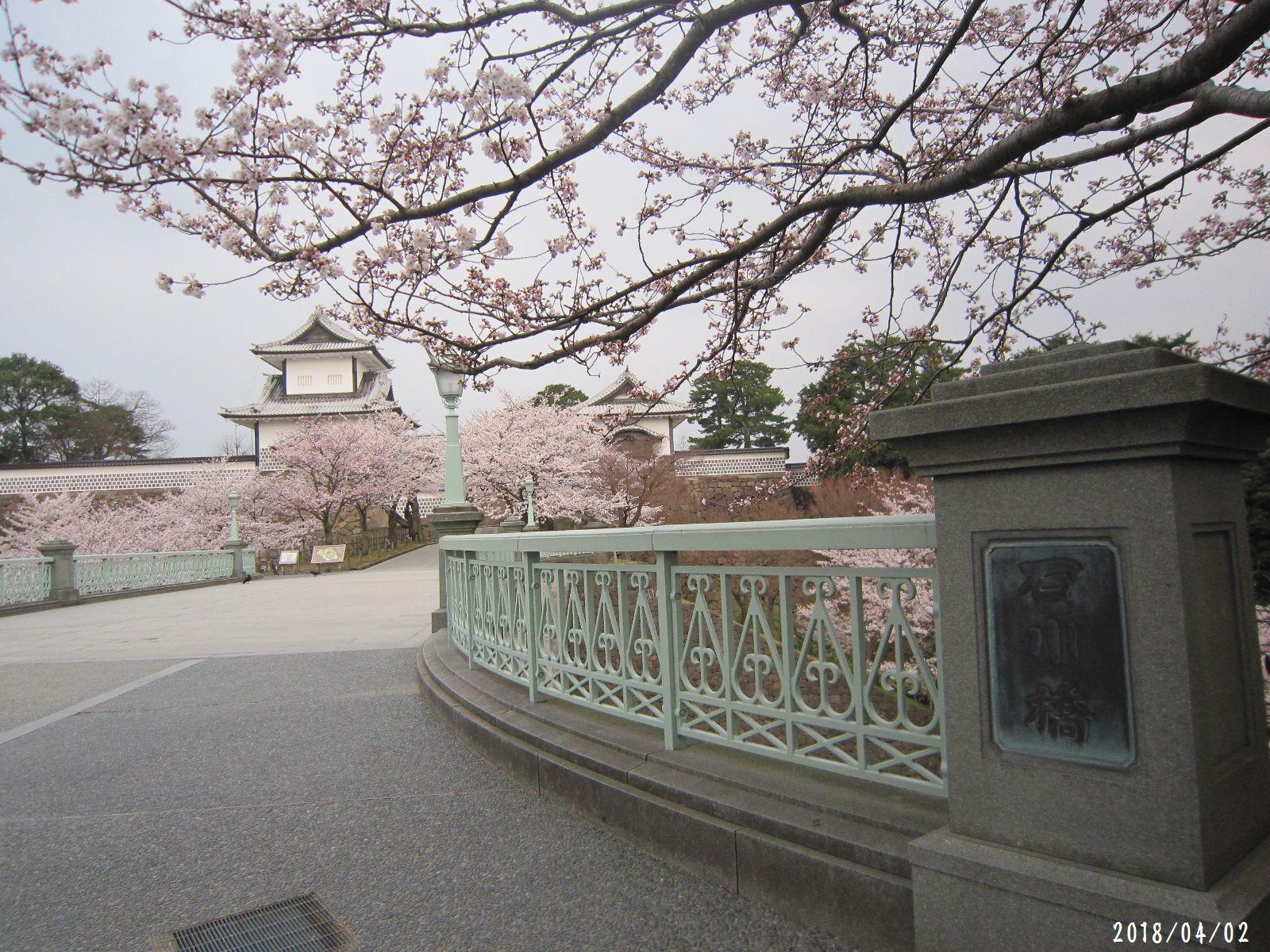 桜だより❀ 満開です❀ (4月7日 追記あり)  _a0207574_17171149.jpg