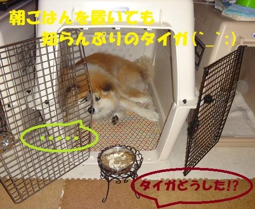 f0121712_08063610.jpg