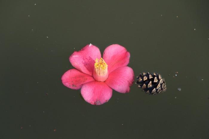 桜の後は。。。_d0150720_16315230.jpg