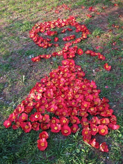 桜の後は。。。_d0150720_16320893.jpg