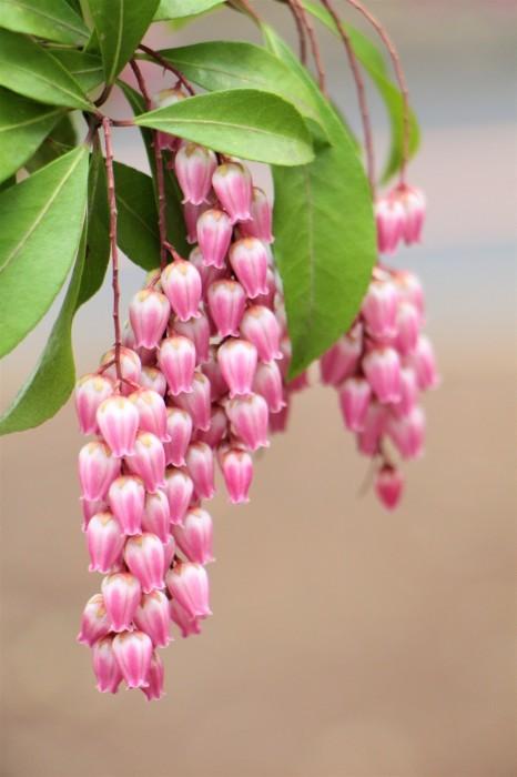 桜の後は。。。_d0150720_16325392.jpg