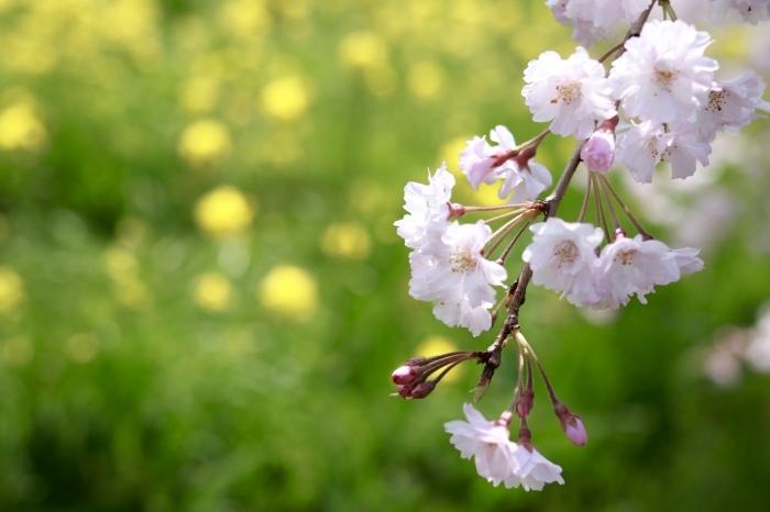 【関宿城博物館】_f0348831_21170338.jpg