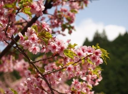 花が美しすぎて・・・_b0185232_23211347.jpg