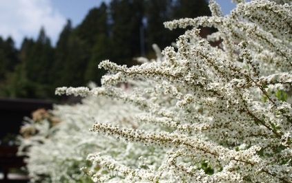 花が美しすぎて・・・_b0185232_23213095.jpg