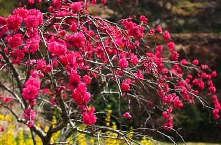 花が美しすぎて・・・_b0185232_23260446.jpg