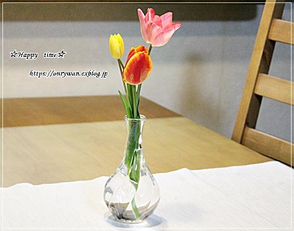 コロッケ弁当と今日のわんことチューリップ♪_f0348032_18134167.jpg