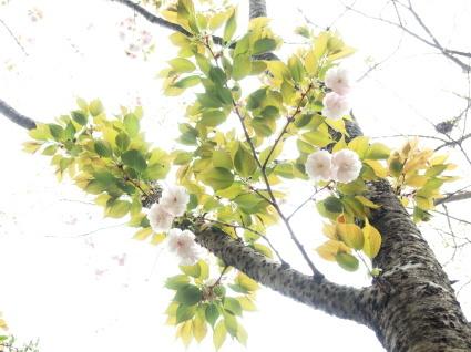 4月のヨガと夜カフェのお知らせ_b0237338_22480407.jpg