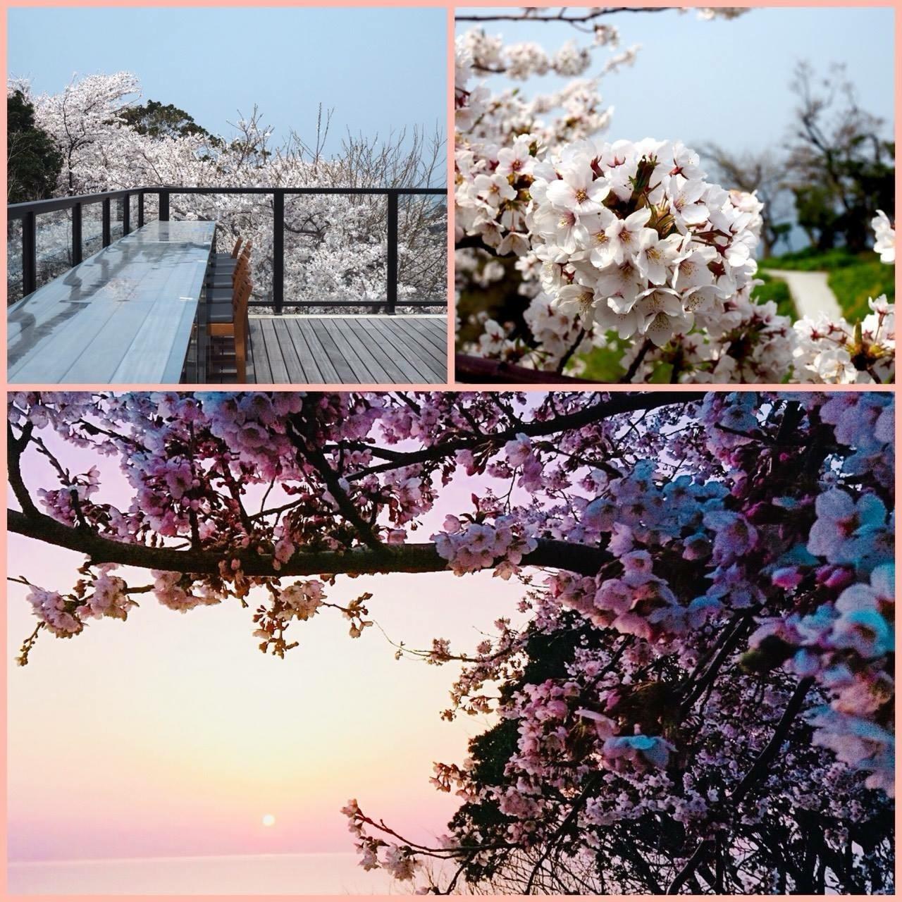 春カフェに行こう!_c0007246_21431003.jpg