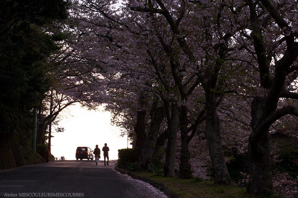 Cherry blooms_e0194450_05275659.jpg