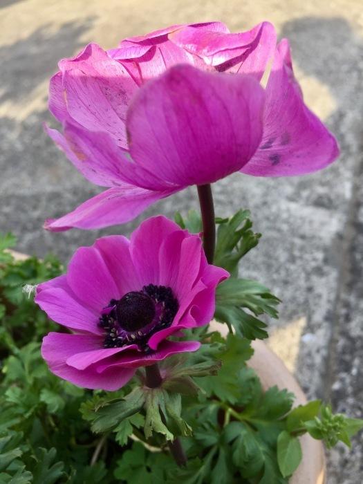 お散歩  (ピンク)と想うこと_d0105967_19273609.jpg