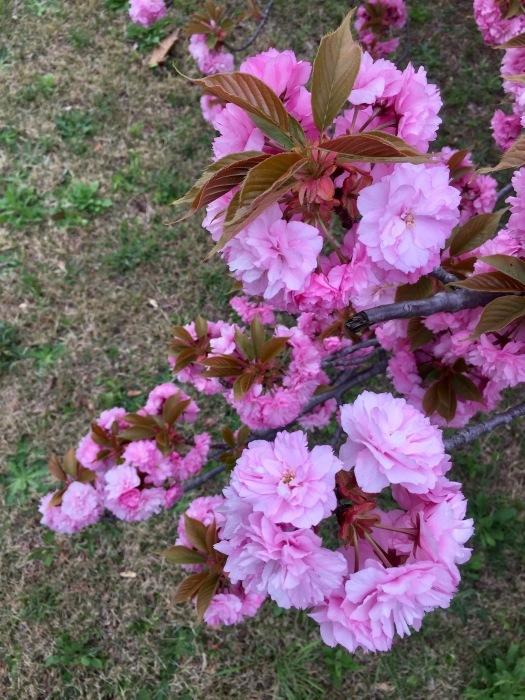 お散歩  (ピンク)と想うこと_d0105967_19301579.jpg