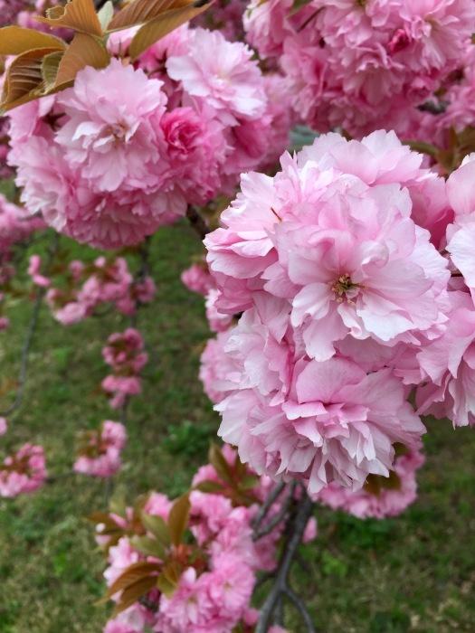 お散歩  (ピンク)と想うこと_d0105967_19303612.jpg