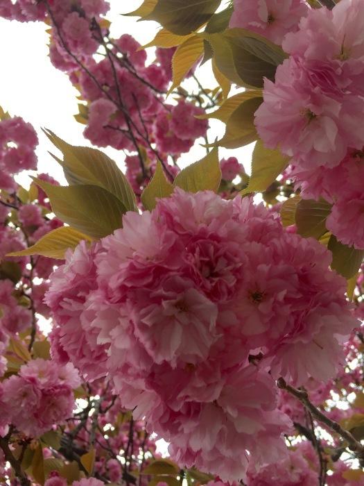 お散歩  (ピンク)と想うこと_d0105967_19312494.jpg