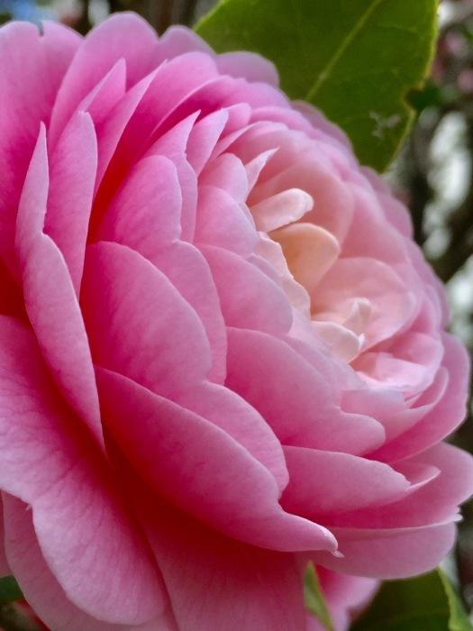 お散歩  (ピンク)と想うこと_d0105967_19320116.jpg