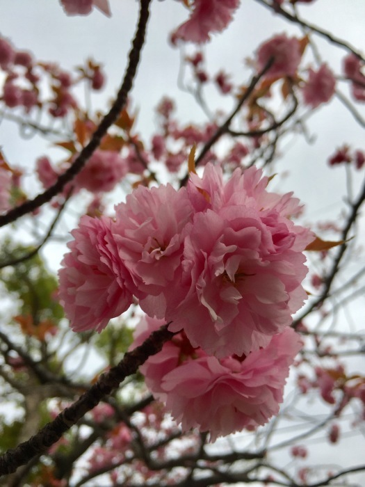 お散歩  (ピンク)と想うこと_d0105967_19324920.jpg