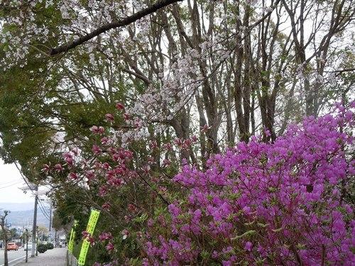 路傍の花、樹々の鳥(204) ~3ショット、2ショット~_b0102572_17575953.jpg